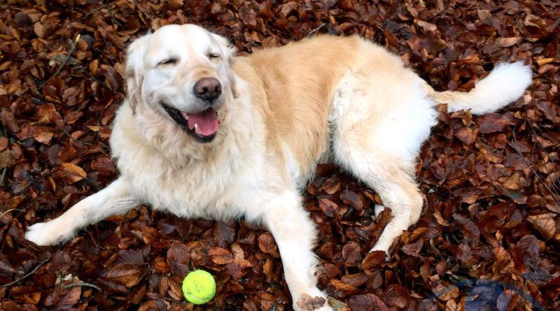 come capire se un cane è felice